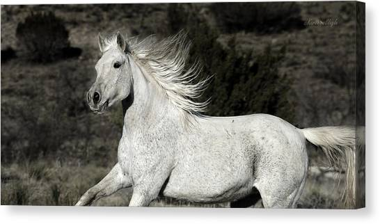 The Mare With The Flying Mane Canvas Print