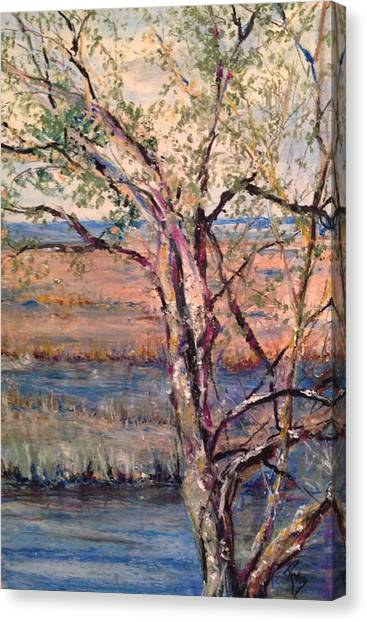 The Marsh And The Live Oak Canvas Print
