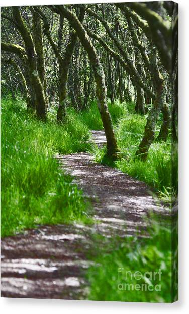 The Meandering Path Canvas Print by Lynne Sutherland
