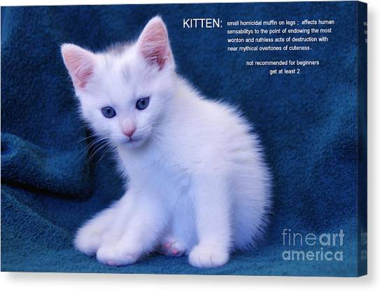 The Meaning Of A Kitten Canvas Print