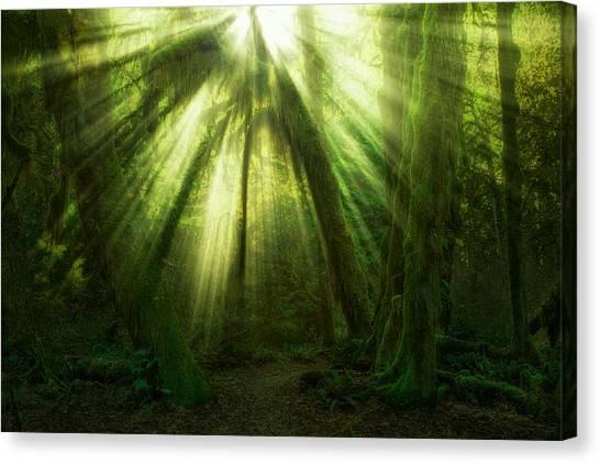 Rainforests Canvas Print - The Miracle by Jaroslav Zakravsky