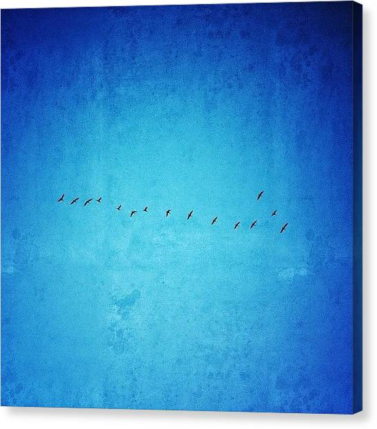 "Large Birds Canvas Print - ""the Moment You Doubt Whether You Can by Joel Lopez"