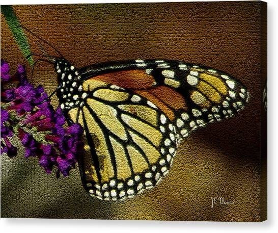 The Monarch / Butterflies Canvas Print