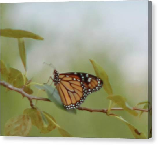 The Monark Canvas Print by Rhonda Humphreys