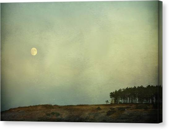The Moon Above The Trees Canvas Print