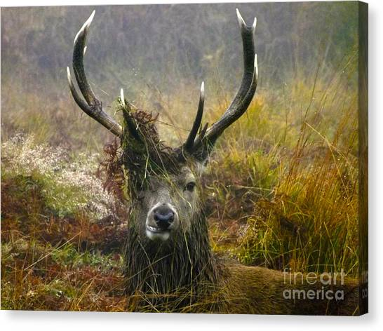 Stag Party The Series The Morning After Canvas Print