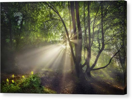 The Morning Light Canvas Print by Fran Osuna