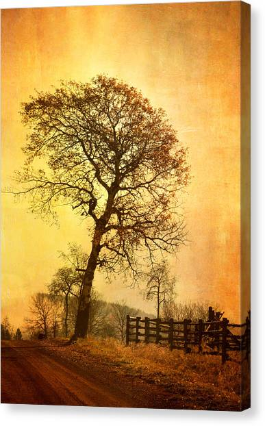 The Morning Tree Canvas Print