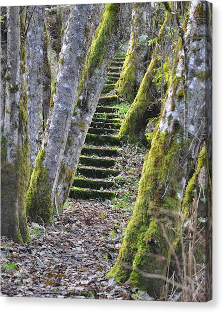 The Moss Stairs Canvas Print