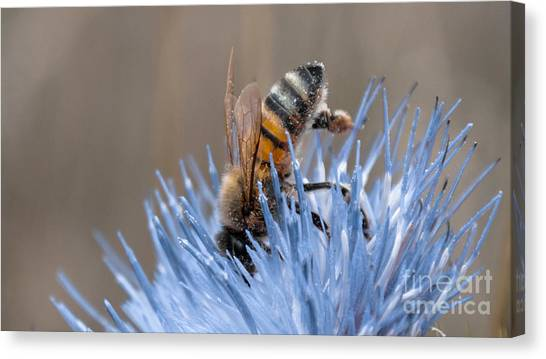 The Naturalist Canvas Print