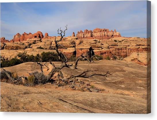 The Needles At Canyonlands National Park Canvas Print