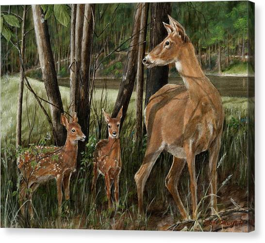 Twin Fawns Canvas Print - The Next Generation by Dreyer Wildlife Print Collections
