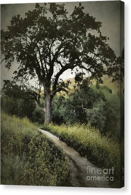 The Old Chumash Trail Canvas Print