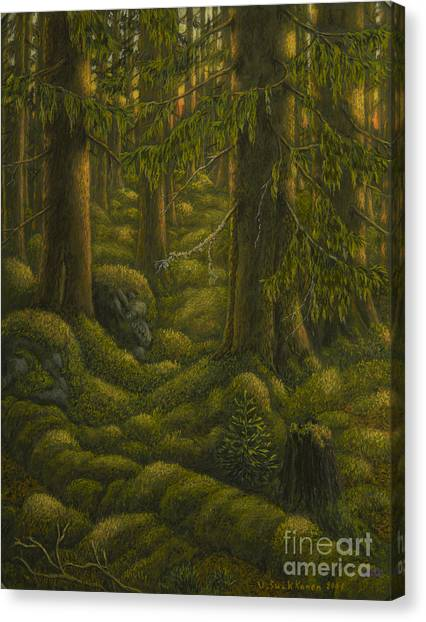Mossy Forest Canvas Print - The Old Forest by Veikko Suikkanen
