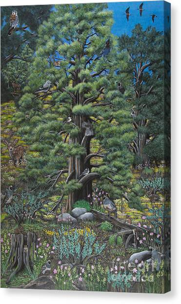 The Old Juniper Tree Canvas Print