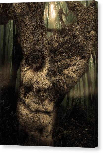 The Old Treant Canvas Print