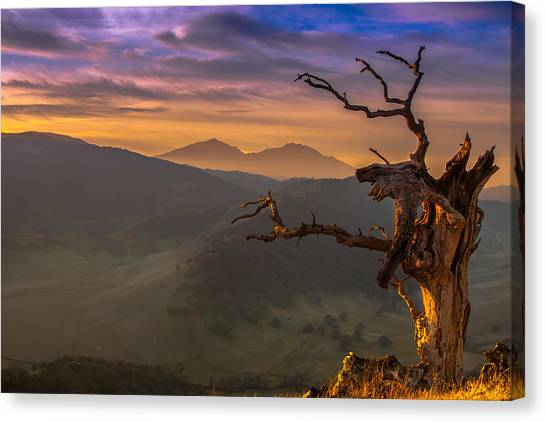 Contra Canvas Print - The Old Tree And Diablo by Marc Crumpler