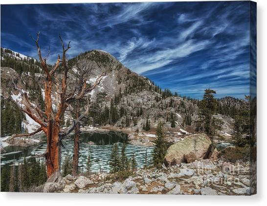 The Old Tree And Lake Mary Canvas Print by Mitch Johanson