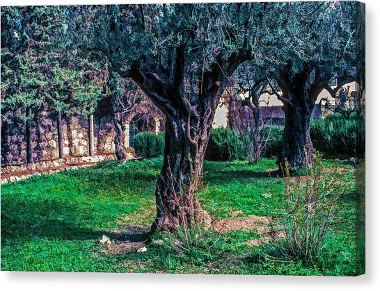 Olive Garden Canvas Prints (Page #13 of 14) | Fine Art America