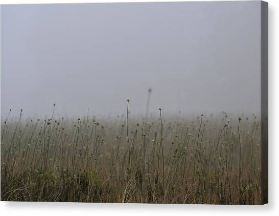 The Onion Field Canvas Print
