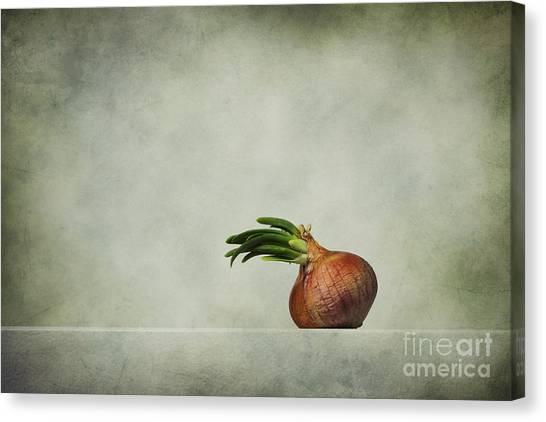 Vegetables Canvas Print - The Onions by Diana Kraleva