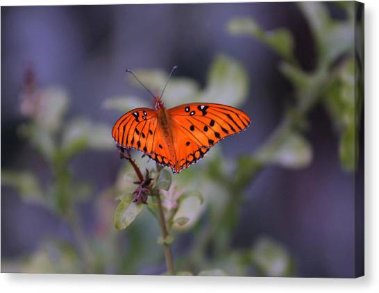 The Orange Wings Canvas Print