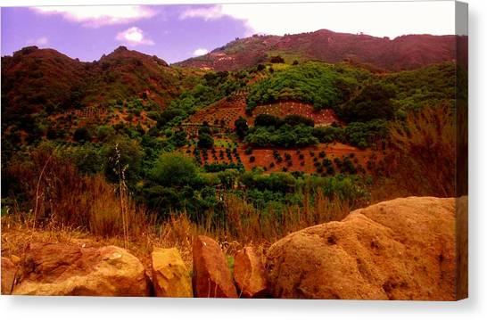 The Orchards Canvas Print by Sharon Costa