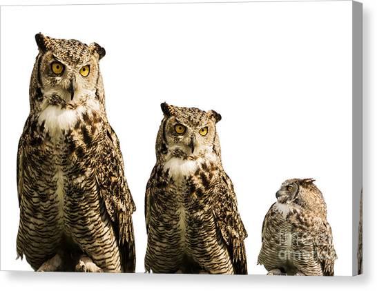 The Owl Trio Canvas Print
