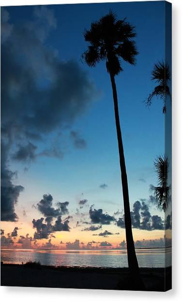 The Palm Majestic Sunset Beach Tarpon Springs Florida Canvas Print