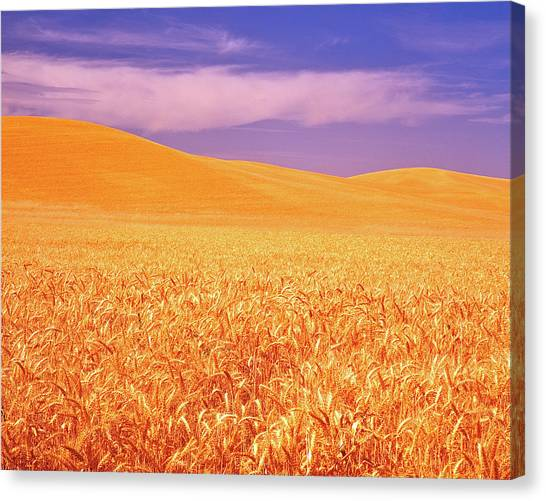 The Palouse Steptoe Butte Canvas Print