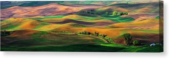 Rolling Hills Canvas Print - The Palouse by Hua Zhu