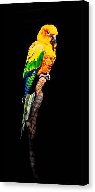 The Parrot Canvas Print by Dasmin Niriella
