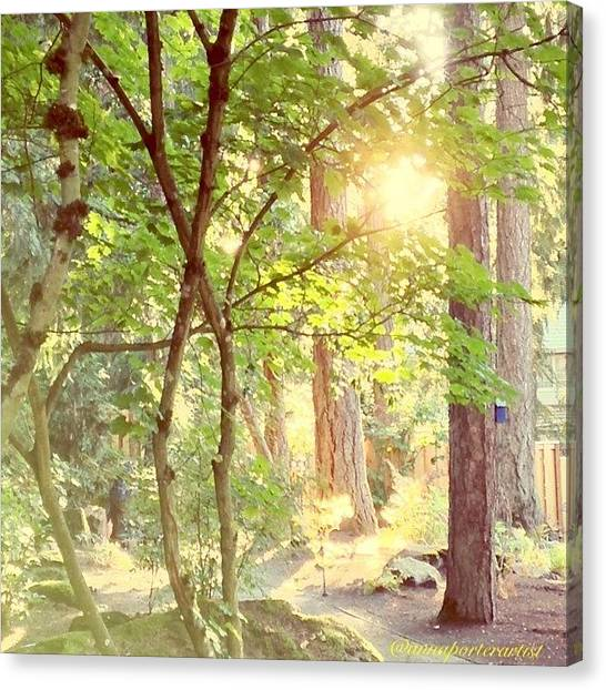 Forest Paths Canvas Print - The Path Of Light by Anna Porter