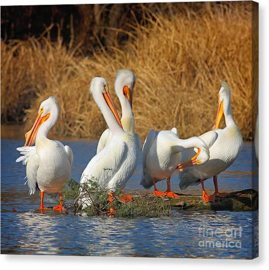 The Pelican Gang Canvas Print