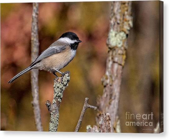 The Perch Canvas Print