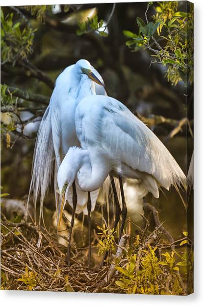 The Perfect Couple Canvas Print by Christina Manassa