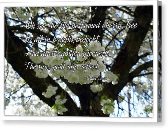 The Perfumed Cherry Tree 2 Canvas Print