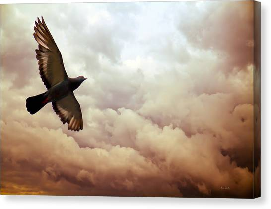 Pigeon Canvas Print - The Pigeon by Bob Orsillo