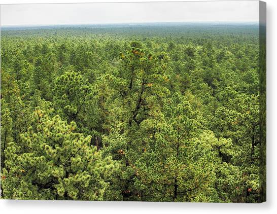 The Pinelands Canvas Print by Dawn J Benko