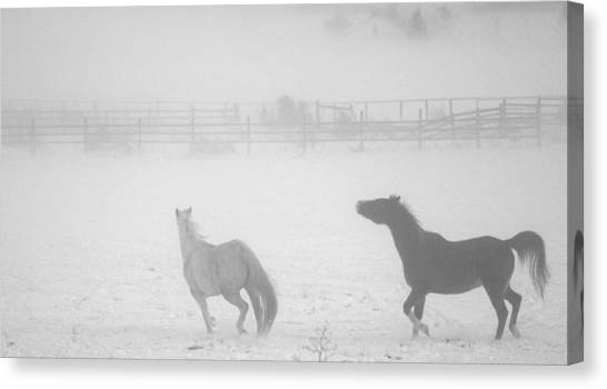 The Play Of Horses Canvas Print