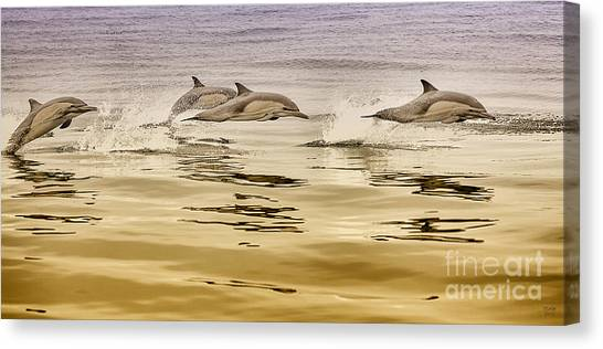 Dolphin Canvas Print, Photographic Print, Art Print, Framed Print, Greeting Card, Iphone Case, Canvas Print