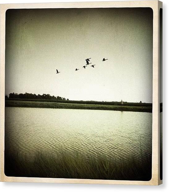 Rural Scenes Canvas Print - The Pond by Natasha Marco