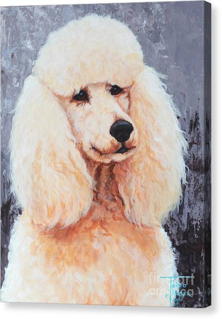 Attentive Poodle Canvas Print
