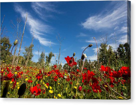 The Poppies Field Canvas Print