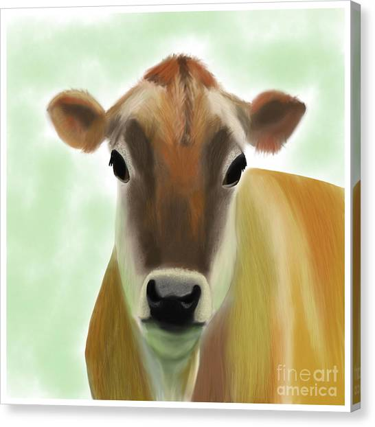 The Pretty Jersey Cow  Canvas Print