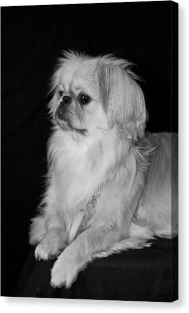 Canvas Print featuring the photograph The Princess by Kristi Swift