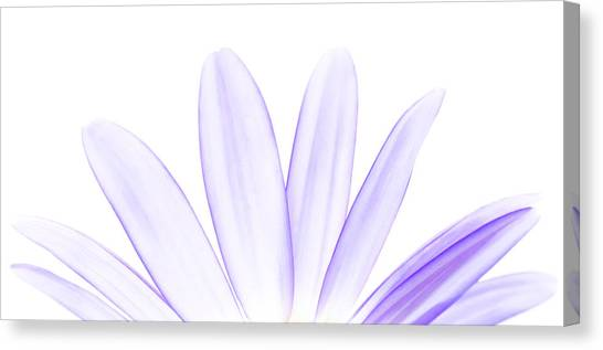The Purple In Your Soul Canvas Print