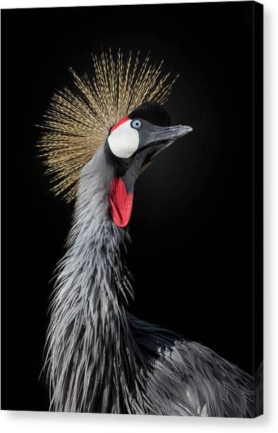 Cranes Canvas Print - The Queen by Fegari