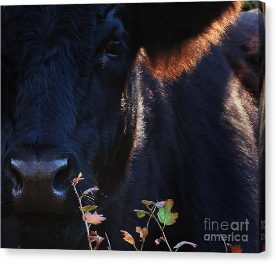 The Quiet One Canvas Print