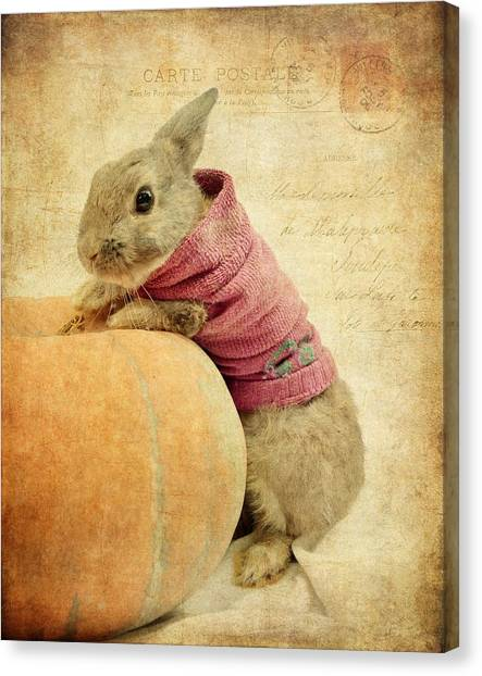 The Rabbit And The Pumpkin Canvas Print